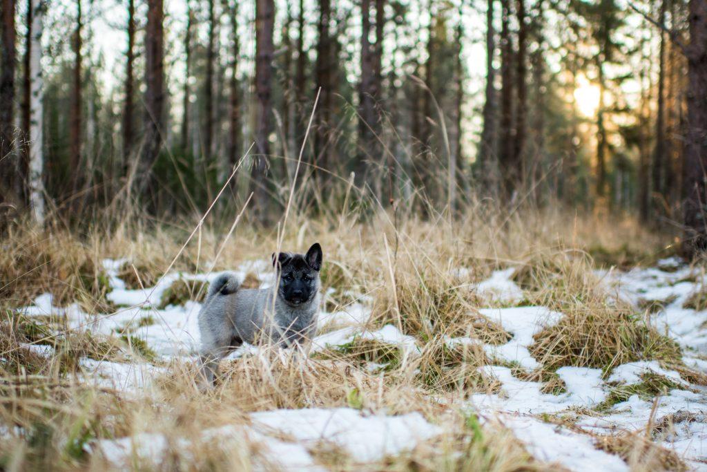 Valokuvaaja: Sanna-Kaisa Mäkelä